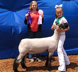 Estes Show Lambs | Winners